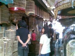 Foto-foto sudut, lorong dan hewan peliharaan yang dijajakan di Pasty Jogja (13)