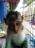 Foto-foto sudut, lorong dan hewan peliharaan yang dijajakan di Pasty Jogja (19)