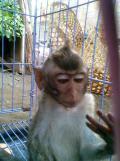 Foto-foto sudut, lorong dan hewan peliharaan yang dijajakan di Pasty Jogja (20)