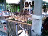 Foto-foto sudut, lorong dan hewan peliharaan yang dijajakan di Pasty Jogja (29)