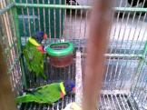 Foto-foto sudut, lorong dan hewan peliharaan yang dijajakan di Pasty Jogja (37)