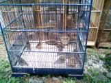 Foto-foto sudut, lorong dan hewan peliharaan yang dijajakan di Pasty Jogja (40)