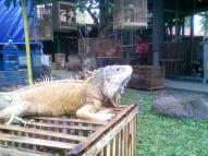 Foto-foto sudut, lorong dan hewan peliharaan yang dijajakan di Pasty Jogja (42)