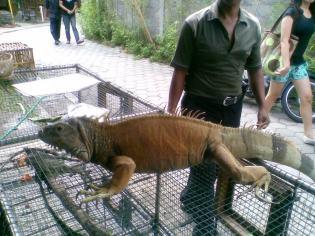 Foto-foto sudut, lorong dan hewan peliharaan yang dijajakan di Pasty Jogja (45)