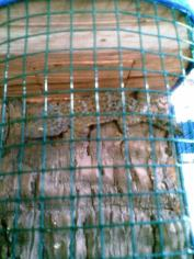 Foto-foto sudut, lorong dan hewan peliharaan yang dijajakan di Pasty Jogja (46)