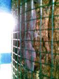 Foto-foto sudut, lorong dan hewan peliharaan yang dijajakan di Pasty Jogja (48)