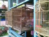 Foto-foto sudut, lorong dan hewan peliharaan yang dijajakan di Pasty Jogja (8)