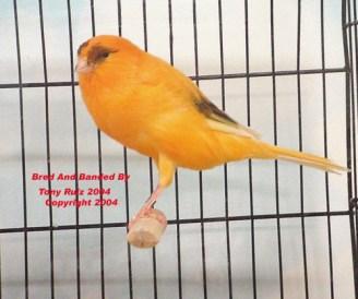 2004__bird_show_090