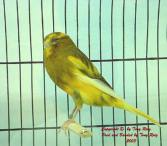 Y.va Yellow 3
