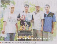 Mr Mamo Tegal - Cucak Hijau Pelet Raih Juara 3 di Lomba Burung Piala HB X