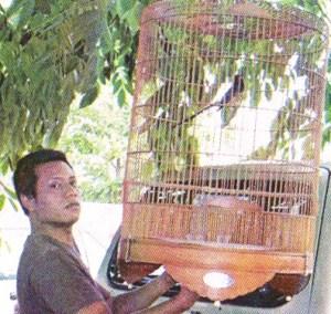Batasi penjemuran burung di musim panas