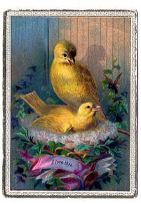 Wallpaper, gambar, foto, lukisan burung kenari (picture, painting and photo canary) (1)
