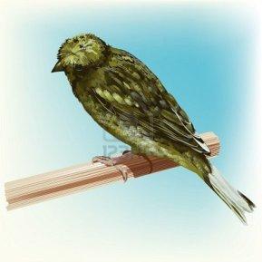 Wallpaper, gambar, foto, lukisan burung kenari (picture, painting and photo canary) (4)