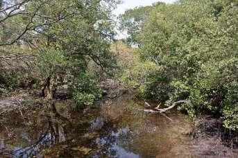 Hutan Bakau di Pulau Rambut - foto dokumen Silvia Faradila - ACI