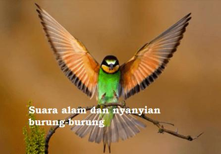 Suara alam dan nyanyian burung