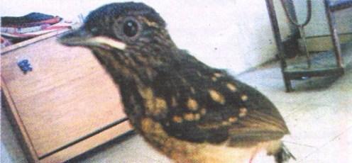 Anakan dari Yaqisa Bird Farm