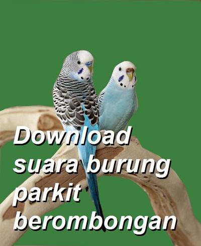 Dengar Dan Download Suara Belalang Kecek Biasa : dengar, download, suara, belalang, kecek, biasa, 4.000-an, Audio, Berbagai, Suara, Burung,, Aneka, Omkicau.com:, Lengkap, KICAU