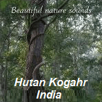 Suasana Hutan Kogahr India