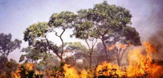 Kebakaran hebat di Gunung Argopuro ancam kelangsungan