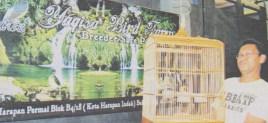 Yaqisa Bird Farm