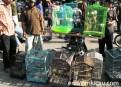 Pasar Petekan Surabaya 6