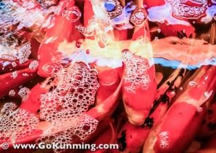Ikan hias pun ada di Pasar Yuanbo