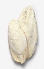 cuttlefish-bone