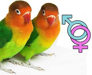 Sexing Parrots