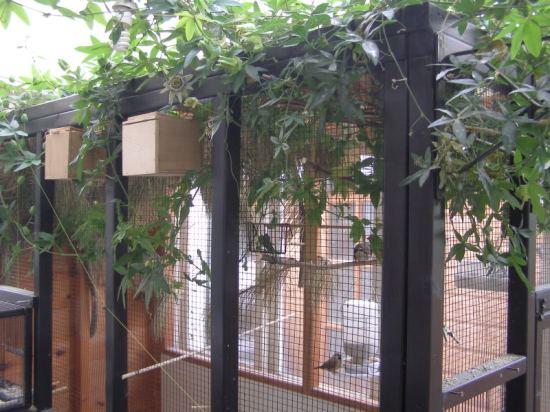 Bisa menggunakan kandang aviary ataupun koloni