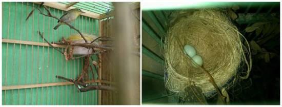 Indukan betina dan telurnya