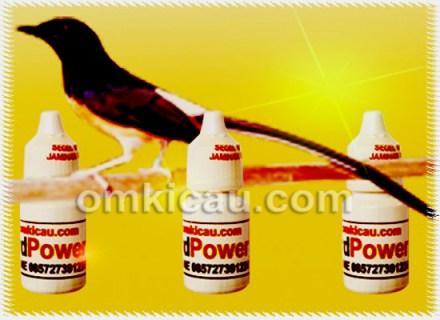 ATP dan Bird Power