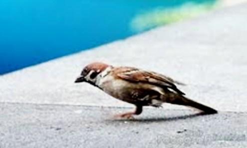 kelumpuhan kaki burung