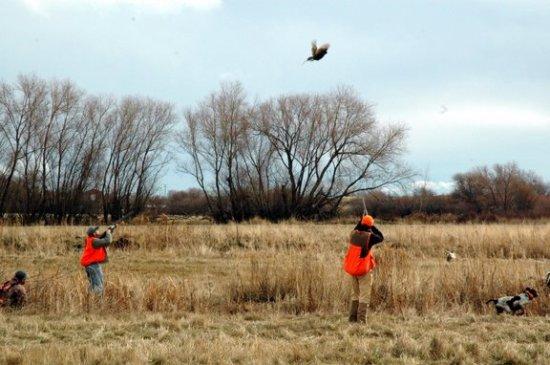 Di beberapa negara banyak dikembang biakan untuk tujuan olahraga berburu
