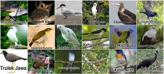 Daftar Burung dalam status Kritis (CR)