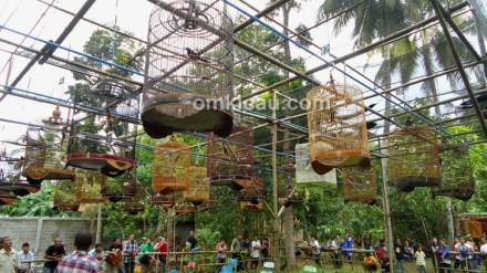 Kelas murai batu Jaga Praya Cilacap