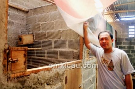 Breeding murai batu RBF Tangerang Selatan
