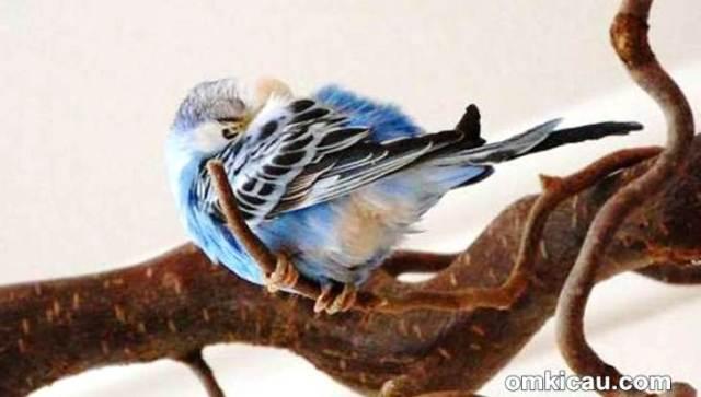 Burung sakit perlu penanganan segera