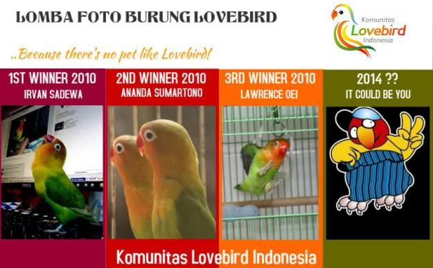 Lomba Foto Lovebird