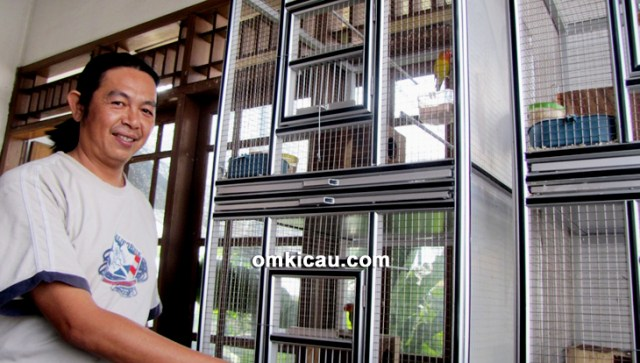 Breeding lovebird Music BF Jakarta