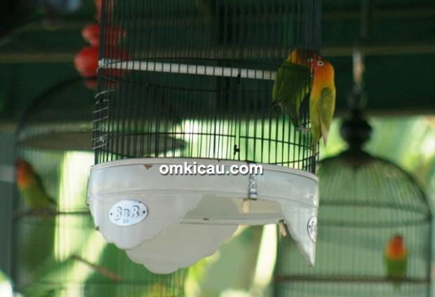 Nelayan Cup I Juwana