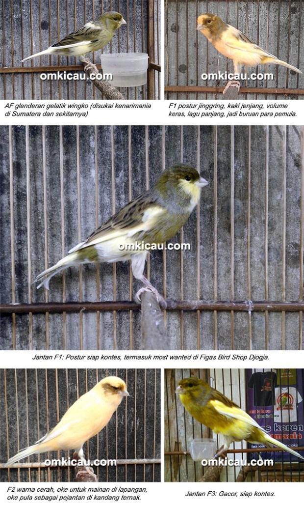Figas Bird Shop Djogja