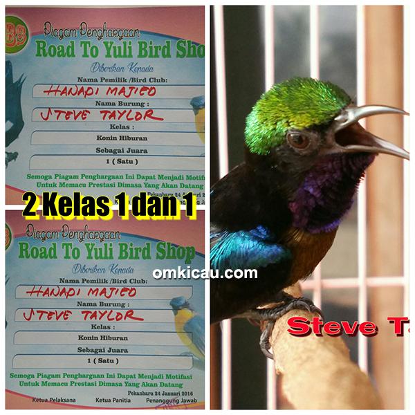 Kolibri ninja Steve Taylor milik Om Hanapi Pekanbaru3