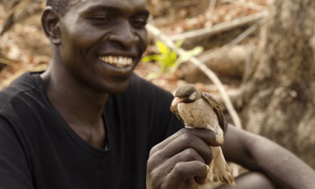 Pencari madu dan burung honeyguide