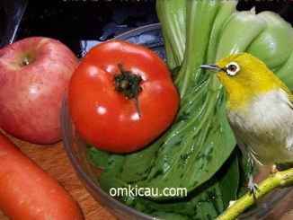 Membuat jus buah dan sayur untuk burung pleci