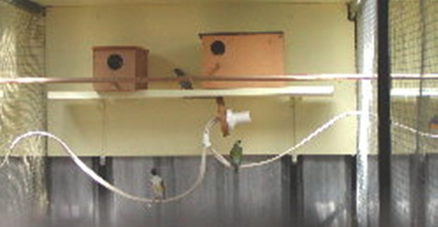 Lampu bohlam yang diletakkan di bawah tempat sarang