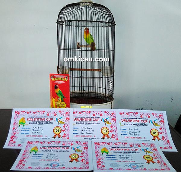 Lovebird Red Borneo