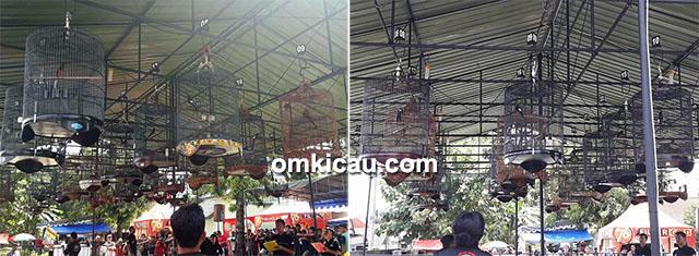 Lomba burung berkicau Piala Danki di Jogja