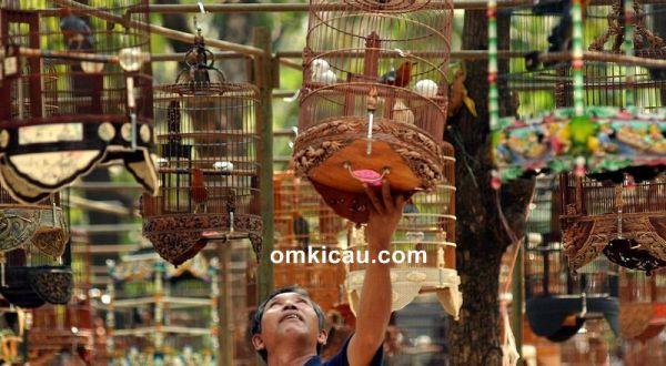 Solusi untuk burung yang sering ngetem di lapangan