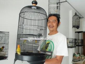 Perawatan lovebird balibu ala Om Tony Music