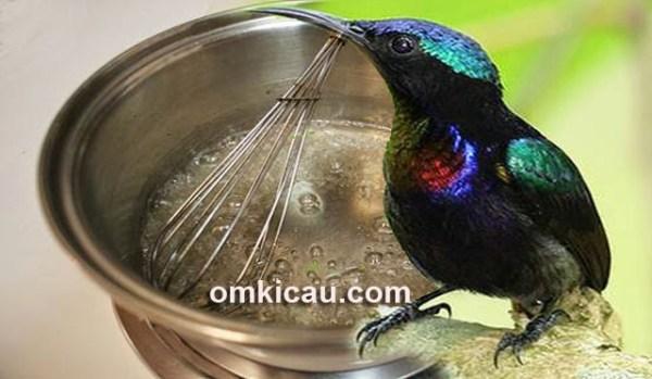 Meracik nektar untuk burung-madu